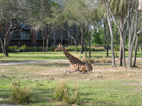 Disney World's Animal Kingdom Lodge