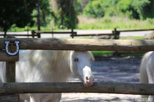 Pony Rides at Fort Wilderness ©Pixie Dust Daily