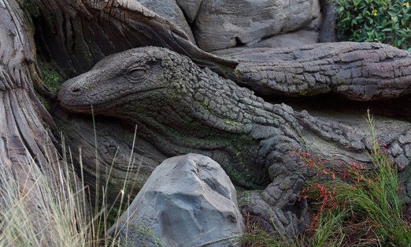 New Tree of Life Roots ©Disney