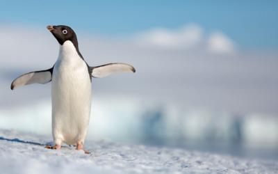 DisneyNature's Penguins Film Coming in 2019