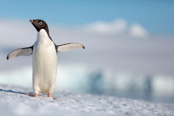 DisneyNature Penguins Film
